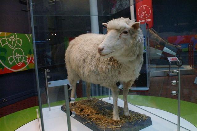Dolly e outros animais clonados não podem ser patenteados