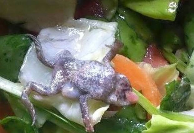 Sarah Moss encontrou um sapo morto em um pacote de espinafre. (Foto: Reprodução)