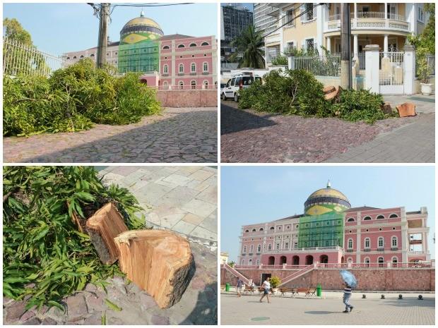 Restos da árvore estavam foram deixados próimo ao Teatro Amazonas (Foto: Mônica Dias/G1)