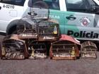 Polícia apreende aves mantidas em cativeiro   (Divulgação/Polícia Ambiental)