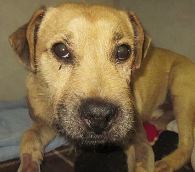 'Shiloh' foi levado para hospital veterinário em Norman, os veterinários retiraram os espinhos. (Foto: Reprodução/Animal Emergency Center)