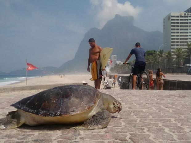 Tartaruga foi encontrada morta na Praia de São Conrado (Foto: Marcello Farias/ Salvemos São Conrado)