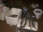 43 kg de pescado são apreendidos durante blitz na TO-010