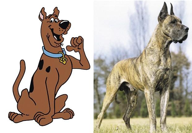 As raças dos animais na vida real (Foto: Reprodução/Internet)