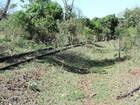 ANTT alega que apura supostas irregularidades na ferrovia na região
