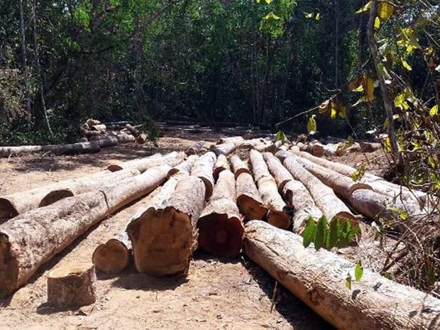 Operação apreende madeira e aplica multa de R$ 1 milhão em Mato Grosso (Foto: Assessoria/Sema-MT)