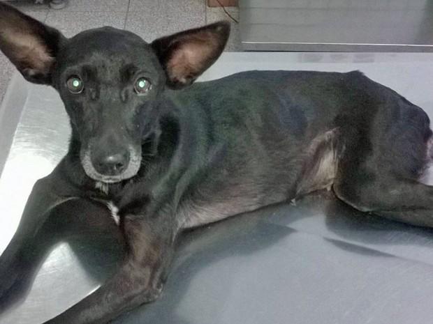 A cadela Lucy foi resgatada nas ruas de Taguatinga, no Distrito Federal (Foto:  Victor Dutra Bomfim/Arquivo Pessoal)