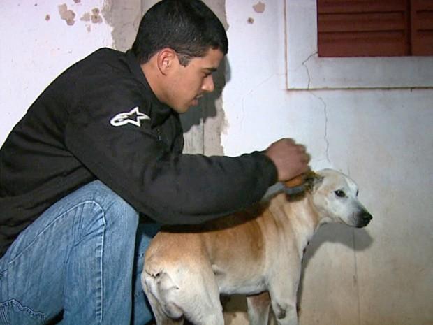 Tupão é descendente de boxer e está há 15 anos com a família (Foto: Paulo Chiari/EPTV)