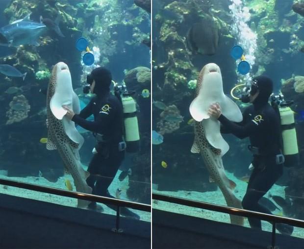 Tubarão ficou em 'transe' ao receber massagem de mergulhador (Foto: Reprodução/YouTube/Aquariumdeslagons1)