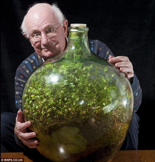 David Latimer criou o jardim em 1960, e desde então regou as plantas apenas uma vez (Foto: Reprodução/Daily Mail)