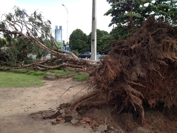 Árvore deixou o trânsito lento no local por mais de 1 hora (Foto: Walter Paparazzo/G1)