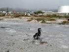 Após tsunami, milhares de aves morrem em refúgio perto do Havaí
