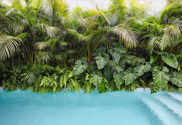 Parede verde. Para disfarçar a proximidade entre a piscina e o muro, o paisagista preencheu o canteiro com palmeiras-arecas, guaimbês-da-folha-ondulada e samambaias (Foto: Ilana Bessler / Divulgação)