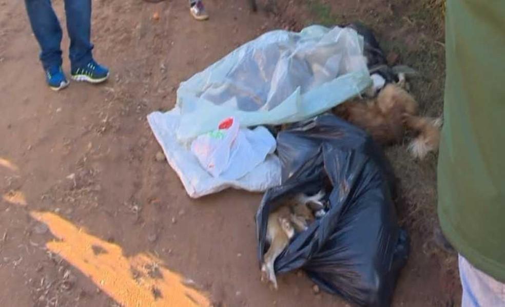 Cachorros amanheceram na beira da estrada sem vida em Cachoeira do Sul (Foto: Reprodução/RBS TV)