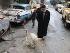 Sírio usa peru como guarda para proteger coleção de carros antigos