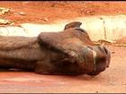 Homem deixa cavalo ferido em calçada e diz não ter como resgatá-lo