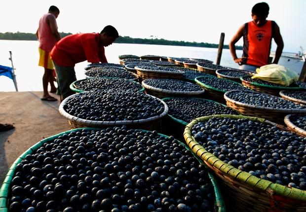 Extração de açaí na Amazônia: negócios da floresta promovem economia sustentável (Foto: Divulgação/SECOM AM)