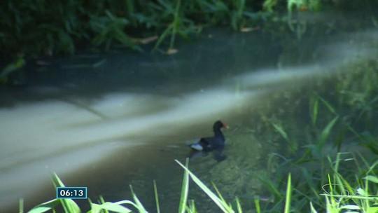 Água do rio Formate muda de cor e preocupa moradores de Viana, ES