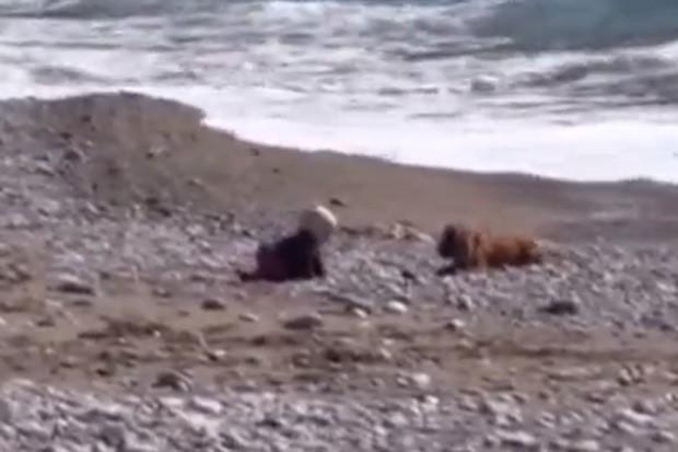 Cão correu pela praia e parou em frente a bebê para impedir que criança avançasse em direção ao mar (Foto: YouTube/Reprodução/Kanalistan)