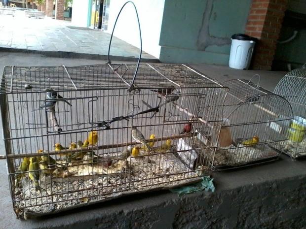 Aves vão passar por avaliação clínica para identificar se estão em boas condições de saúde (Foto: Divulgação / Polícia Ambiental)