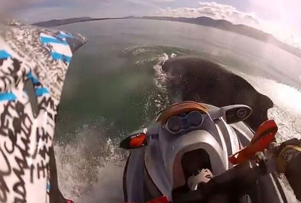 Piloto colidiu moto aquática contra baleia-jubarte (Foto: Reprodução/YouTube/wwwmorganis)