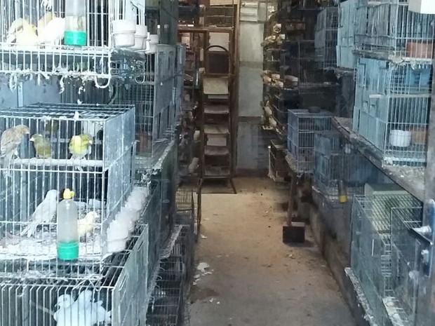 Polícia apreende cerca de 1000 aves com sinais de maus-tratos