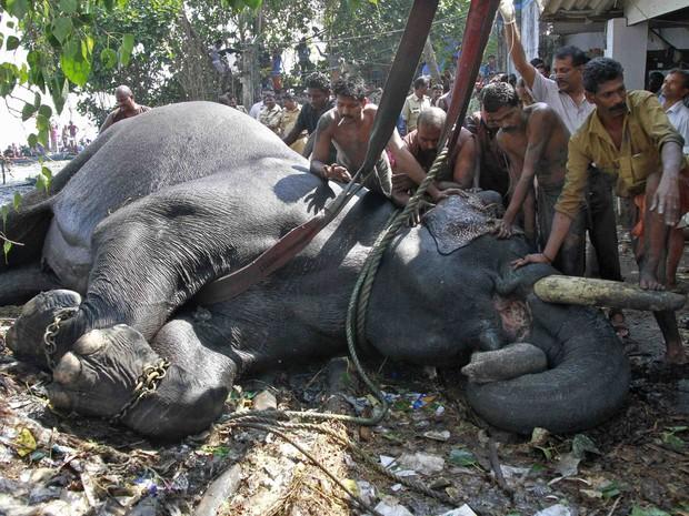 Apesar do resgate, animal não resistiu e morreu após receber assistência veterinária (Foto: Sivaram V/Reuters)