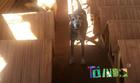 Campanha quer ajudar cães do Silvestre (Divulgação)