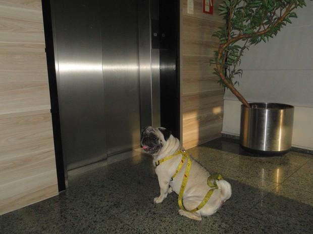 Constituição Federal não proibe a permanência de animais em apartamentos.  (Foto: Roberta Cólen/ G1)