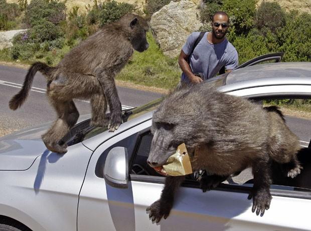 Cena ocorreu em estrada em Millers Point, perto da Cidade do Cabo. (Foto: Schalk van Zuydam/AP)