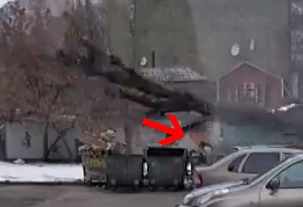 Árvore não esmagou russa por pouco (Foto: Reprodução)