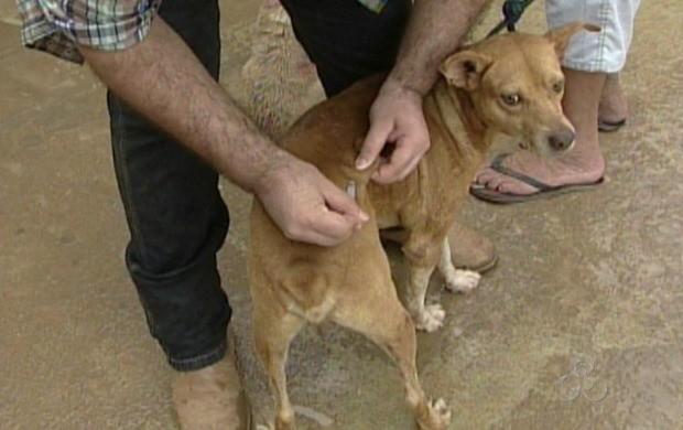 Cerca de 15 mil cães e gatos foram imunizados no município de Ariquemes (Foto: Bom Dia Amazônia)