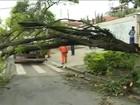 Após temporal, moradores ainda enfrentam transtornos (Reprodução GloboNews)