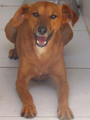 Cachorro no Canil Municipal de Viçosa (Foto: Sovipa/Divulgação)