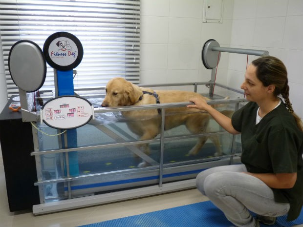 A esteira aquática alivia a sobrecarga, evitando lesões nos cachorros obesos (Foto: Divulgação/Endocrinovet)