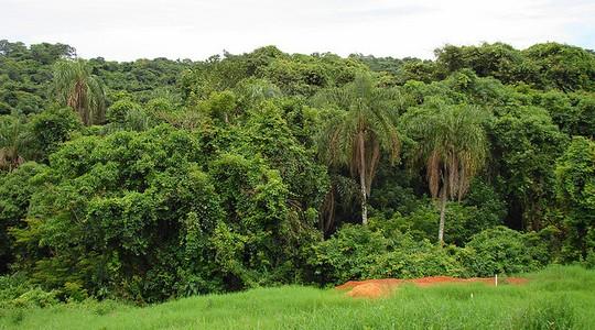 Fragmentos de floresta (Foto: Mauro Guanandi/ Flickr)