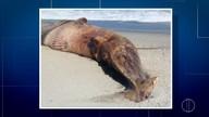 Prefeitura de Quissamã investiga morte de animais marinhos em praias da cidade