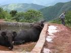 Três elefantes presos em depósito de água são resgatados na China