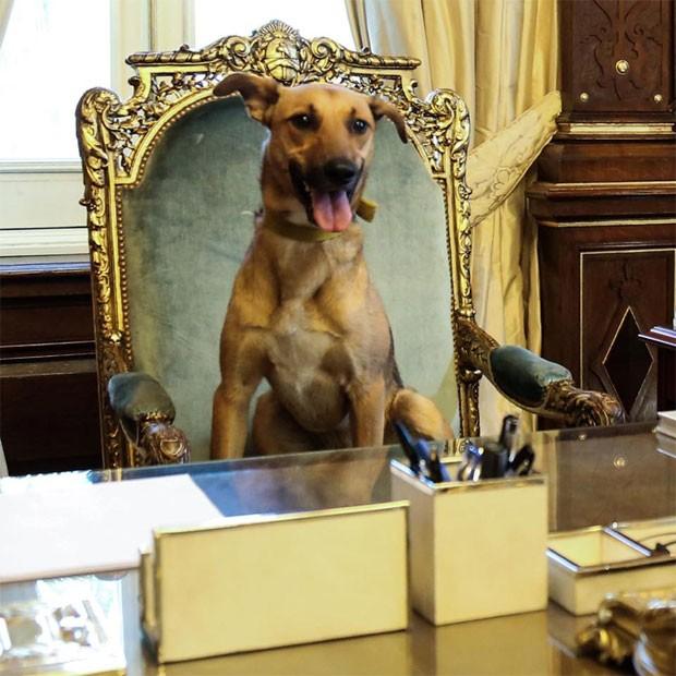O presidente da Argentina, Mauricio Macri, publicou neste domingo (17) em sua conta oficial no Facebook uma foto de seu cachorro, Balcarce, sentado na cadeira presidencial na Casa Rosada, sede da presidência argentina (Foto: Reprodução/Facebook/Mauricio Macri)