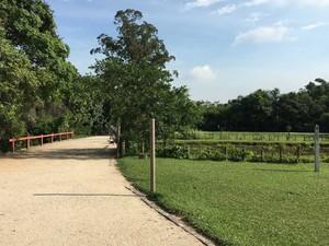 Bosque da Barra abre de terça a domingo, das 8h às 17h. (Foto: Mariucha Machado/G1)