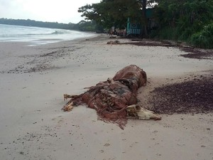 Dez carcaças de bois amanheceram na manhã desta sexta-feira, 16, na praia do Conde, em Barcarena. (Foto: Enize Vidigal/Arquivo pessoal)