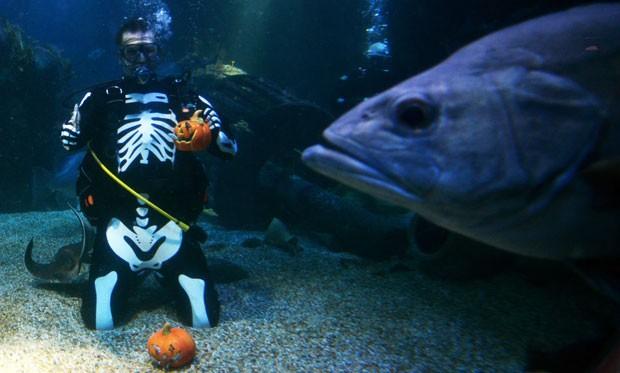 Peixe ficou parecendo gigante ao surgir na frente da câmera. (Foto: Johannes Eisele/AFP)