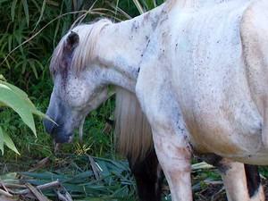 Cavalo abandonado no bairro Nova Campinas, em Campinas (Foto: Reprodução EPTV)