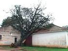Vento derruba árvores e provoca transtornos  (Reprodução/RBS TV)