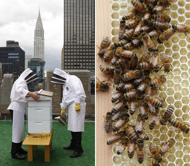 O objetivo é começar a produzir o próprio mel, além de ajudar a polenizar as plantas da região. (Foto: Kathy Willens/AP)