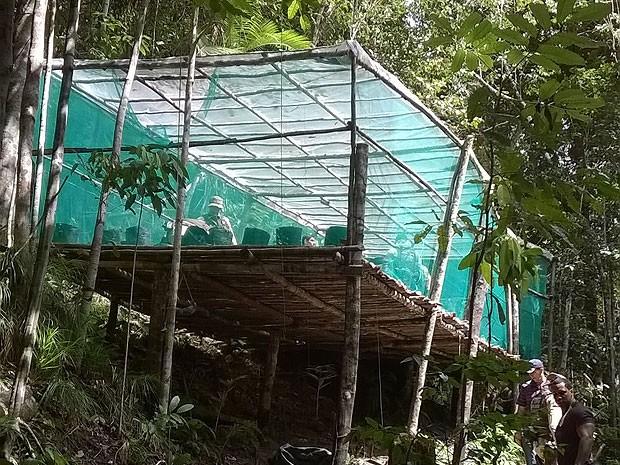 Estufa onde foram encontrada 70 mudas de maconha.  (Foto: Hugo Santos/Radar 64)
