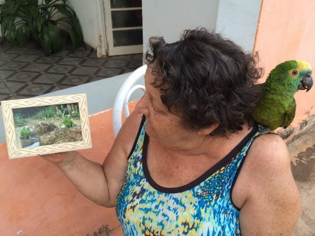 Idosa mostra fotos das papagaias que a fizeram companhia  (Foto: Isabela Cavalcante / G1 MS)