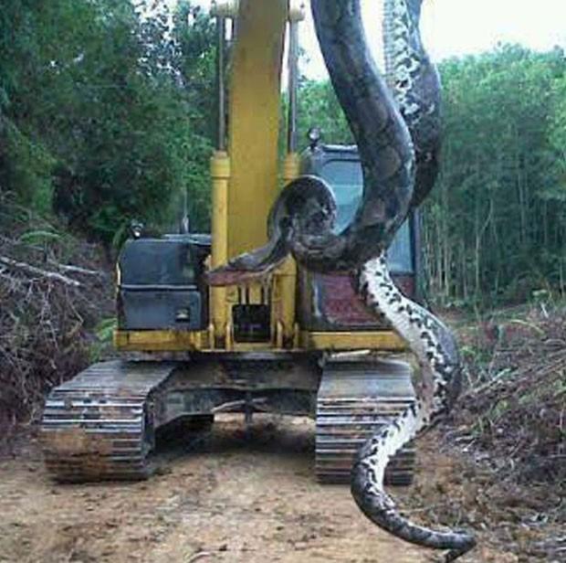Falso vídeo mostra um cobra gigante que teria sido capturada nos EUA (Foto: Reprodução/YouTube/EpicToolTime)