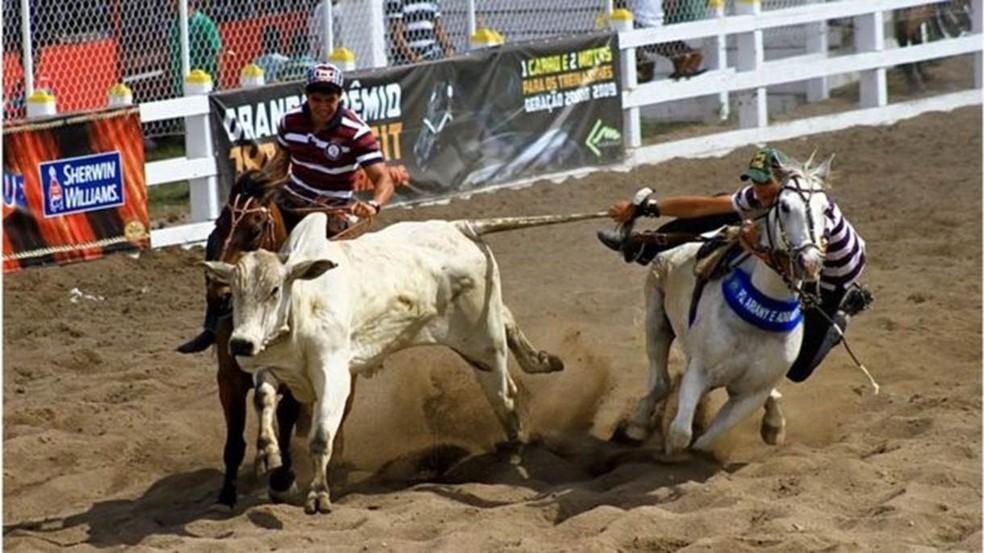 Nas vaquejadas, cavaleiros derrubam bois em busca de prêmios (Foto: Divulgação/Tatiana Azeviche/BBC)