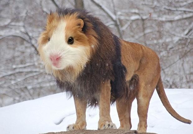 Site compilou diversos posts feitos no Reddit que mostram montagens de animais (Foto: Reprodução)